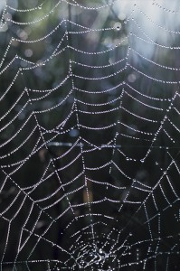 24678432wetcobweb