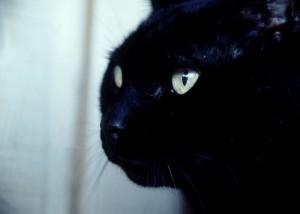 7719617blackcat